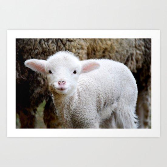 Lamb Art Print