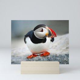 Magnificent Beautiful Cute Little Atlantic Puffin Close Up Ultra HD Mini Art Print