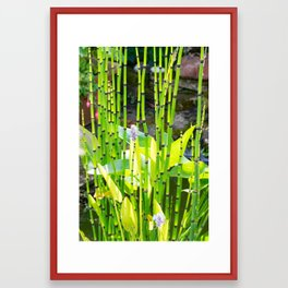 A view from the garden seat to the pond plants. Framed Art Print