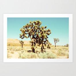 Joshua Trees in the California Desert Art Print