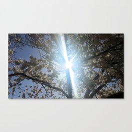 Sunbeam Canvas Print