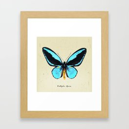 Butterfly01_Ornithoptera  Aesacus Framed Art Print