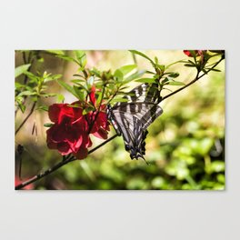 Butterfly on an Azalea Canvas Print