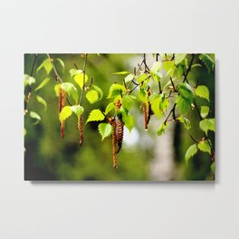 The birch leaves and catkins Metal Print