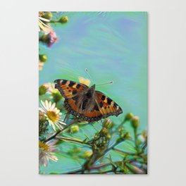 The butterfly collecting pollen on a flower Canvas Print