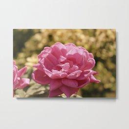 Pink Vintage Flower Hydrangea Metal Print