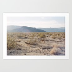 Panamint Valley Coyotes Art Print
