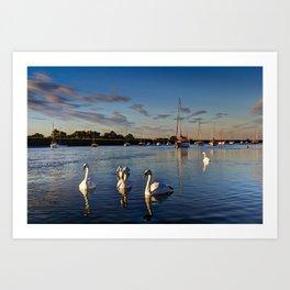 Graceful Swans  Art Print