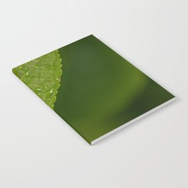 Floral Leaf 05 | Nature Photography Notebook