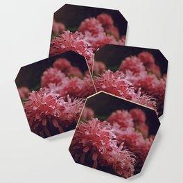 Pink Bellingrath Floral Coaster