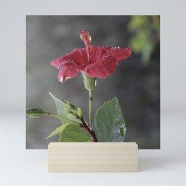 Hibiscus rosa-sinensis Mini Art Print