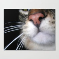 Kitty Nose Canvas Print