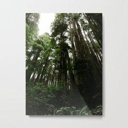 Redwoods #1 Metal Print