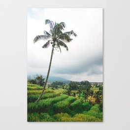 Lone Palm Tree   Nature Landscape Photography of Bali Indonesia Rice Field Terraces Canvas Print