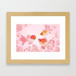 Cherry blossom goldfish Framed Art Print