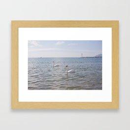 Riviera Swans Framed Art Print