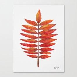 Staghorn sumac leaf | Feuille de sumac vinaigrier  Canvas Print