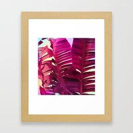 Tropical Sunrise Framed Art Print