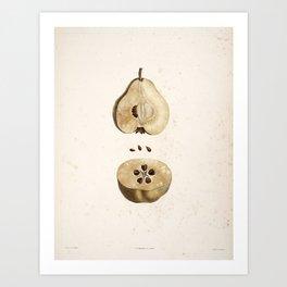 Pear Disection Botanical Illustration Art Print