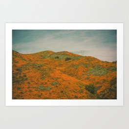 California Poppies 030 Art Print
