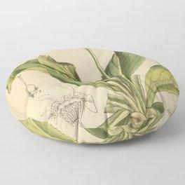 Primula sinopurpurea 1918 Floor Pillow