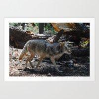Fox in Yosemite National Park Art Print