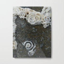 Frills Metal Print