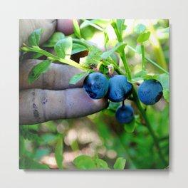 Blue Fingers and Berries Metal Print
