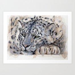 Snow Leopard Resting 778 Art Print