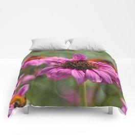 Pink Rudbeckia flower in summer garden Comforters