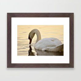 Swan III Framed Art Print