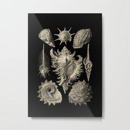 Ernst Haeckel Prosobranchia Sea Shells Metal Print