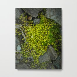 The tiny green forest Metal Print