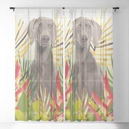 Weimaraner Dog in garden Sheer Curtain