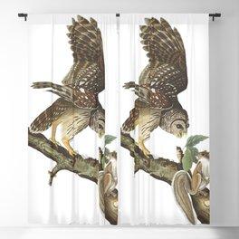 Barred owl, Birds of America, Audubon Plate 46 Blackout Curtain