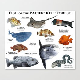 Fish of the Pacific Kelp Forest Canvas Print