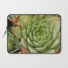 Hens and Chicks Plant Laptop Sleeve