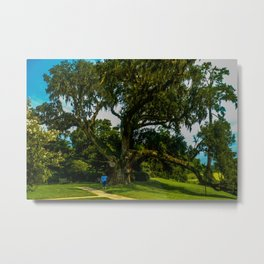 A mighty mighty live oak Metal Print