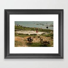 ducks Framed Art Print