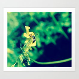 Bee and flower Art Print