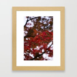 Autumn Red Framed Art Print
