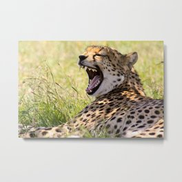 Laughing Cheetah Metal Print