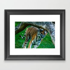 tiger 2 Framed Art Print