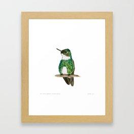 White-throated Hummingbird Framed Art Print