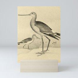 Vintage Illustration - North American Shore Birds (1895) - Black-Tailed Godwit Mini Art Print