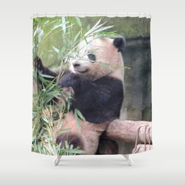 Panda eating bambou Shower Curtain