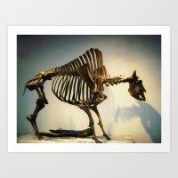 buffalo Art Prints featuring Buffalo by Mandy Chesnut