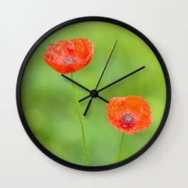 Two red poppies with water drops Wall Clock