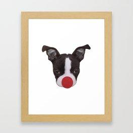 Boston Terrier Puppy Christmas Rudolph  Framed Art Print