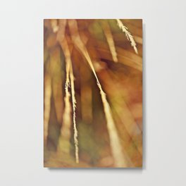 Summer Wheat Metal Print